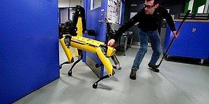 Boston Dynamics'in Robotları İşkence Görmeye Devam Ediyor!