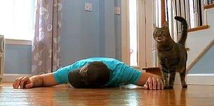 Bayılma Numarası Yaparak Kedi Dostunun Tepkisini Ölçen Adamın Efsane Deneyi