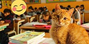 Zafer Tombi ve Dostlarının! Şikâyet Üzerine 'Uzaklaştırılan' Kedi Okuluna Geri Dönüyor 😺