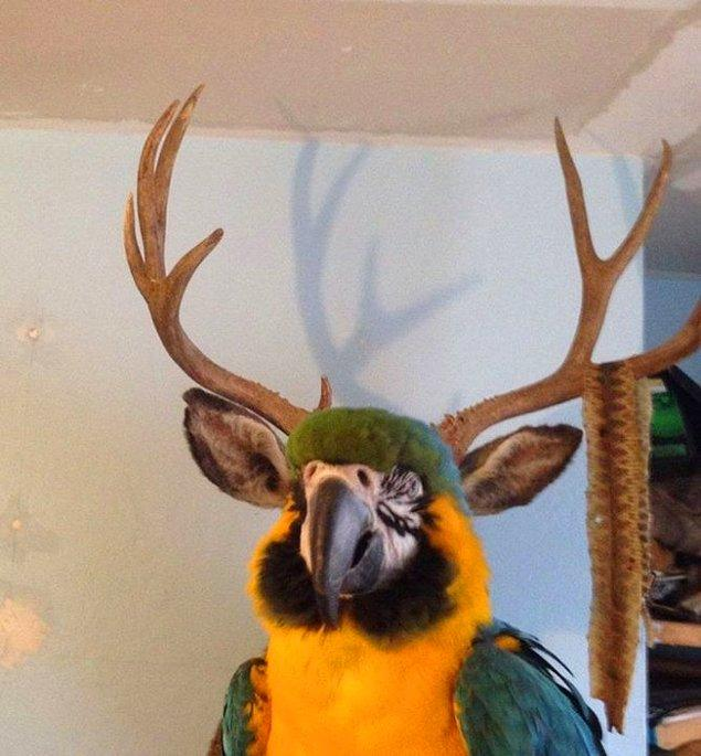 26. Yeni bir papağan cinsiymiş bu da.