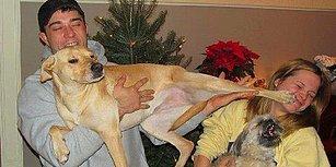 Kıskançlıklarıyla Sizi Kendine Aşık Edecek Dünya Tatlısı 15 Köpek