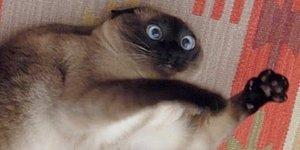 Tercihlerine Göre Sahiplenmen Gereken Kediyi Söylüyoruz!