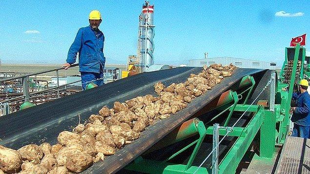 14 fabrikada 4 bin 410 kişi, ekim alanlarında 47 bin 758 çiftçi çalışıyor