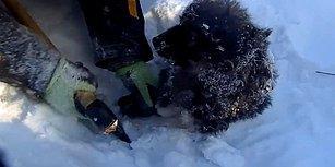 Karlı Zemine Yapışıp Kalan Yavru Köpeği Kurtararak Sıcak Yuvaya Kavuşturan Güzel İnsanlar