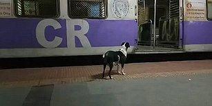 Her Gece Aynı Treni Bekleyen Köpeğin Yürek Burkan Hikayesi