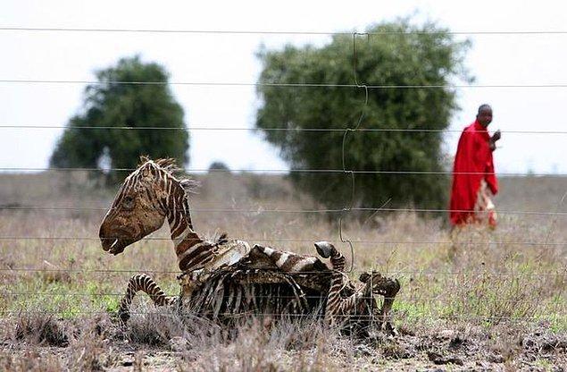 4. Kenya'dan bir görüntü.