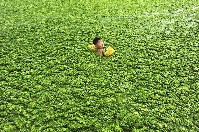 14. Alg dolu bir kıyıda yüzen Çinli çocuk.