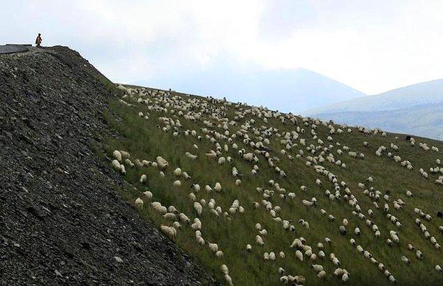19. Alp eteklerinde bir koyun sürüsü.