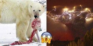 30 İkonik Fotoğrafla Doğanın Ne Kadar Kural Tanımaz Olduğunu Gözler Önüne Seriyoruz!