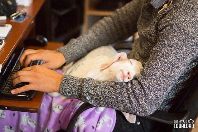4. Bir hayvan kurtarma merkezinde çalışmak işte böyle bir şey olsa gerek...