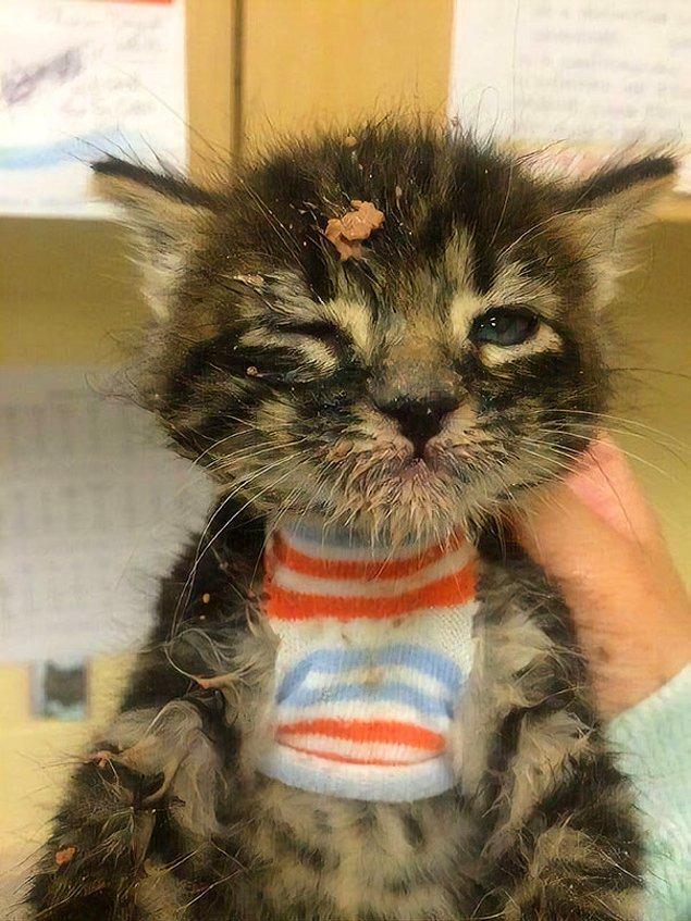 26. Bu kedicik ilk kez katı mama yemişti ve öğrenmesi gereken çok şey vardı...