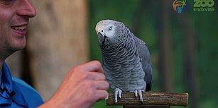 Taklit Yeteneğiyle En İyi Taklitçileri Dahi Madara Edecek Bir Papağan: Einstein