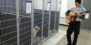 Barınaktaki Hayvanlara Gitar Çalarak Onları Sakinleştiren Muhteşem Adam