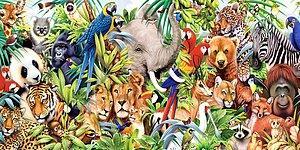 Beğenilerine Göre Hangi Hayvanın Karakterine Sahipsin?