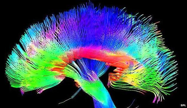 7. Her bir nöron saniyede 1000 sinirsel tepi verebilir ve onbinlerce farklı nöronla sinaptik bağlantı kurabilir. Bir kum tanesi büyüklüğünde beyin dokusu birbiriyle iletişime giren 100.000 nöron ve 1 milyar sinaps barındırır.