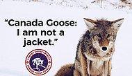 Canada Goose Markasının Ardında Yatan Vahşet! Kan Kokan Bu Montları Giyen Ünlü İsimler!👎🏽