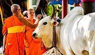 İneğe mi Tapıyorlar?! Dünyanın En Eski ve İlginç İnanışlarından Hinduizm ile İlgili Temel Bilgiler