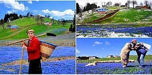 Yılın İki Haftası Görsel Şölen: Mavi Yıldız Çiçeği ile Ünlü Kadıralak Yaylası'na Ziyaretçi Akını!