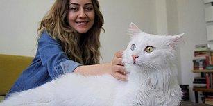 Ayağı Kırık Şekilde İnşaatta Bulunmuştu: 'En Güzel Kedi' Seçilen Sezar ve Yasemin Öğretmenin Hikâyesi