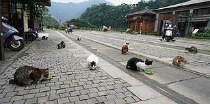 Tayvan'da Bulunan Kedi Köyünden Muhteşem Görüntüler