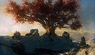 Ağaç Burcuna Göre Karakterini Söylüyoruz!