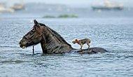 Bir Başka Hayvana Yardım Eden Hayvanların İçinizi Isıtacak Görüntüleri