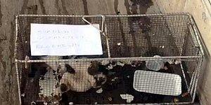 Bunu da Gördük: Ünlü Marketler Zincirinden, Reyondan Sucuk Alan Kediye Hapis Cezası 33