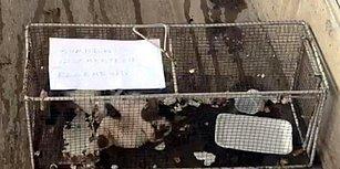 Bunu da Gördük: Ünlü Marketler Zincirinden, Reyondan Sucuk Alan Kediye 'Hapis Cezası'