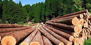 TBMM'de Kabul Edildi: Ormanlar 5 Yıllığına Şirketlere Kiralanacak