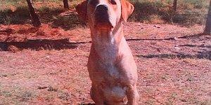 Bir Dosttan Fazlası: Operasyonda Ölen Bomba Arama Köpeği 'Huner' Güvenlik Güçlerinin Hayatını Kurtardı