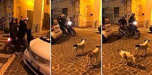 Kovalamak İçin Hazırda Bekleyen Köpekleri Oyuna Getiren Motosikletli Adamlar
