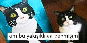 Komik Paylaşımların Demirbaşı Minnoş Kedilerimizle Herkesi Güldürmeyi Başarmış 20 Kişi