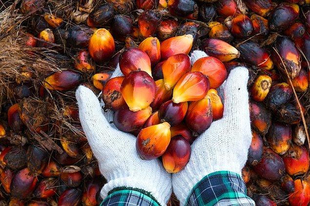 'Palm yağı kanserli farelerde, yayılımı 8-10 kat artırdı.'