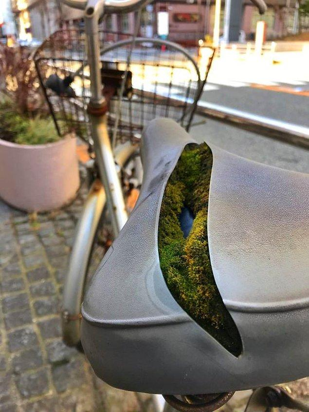 9. Bisikletin içinde kendiliğinden ortaya çıkan yosun
