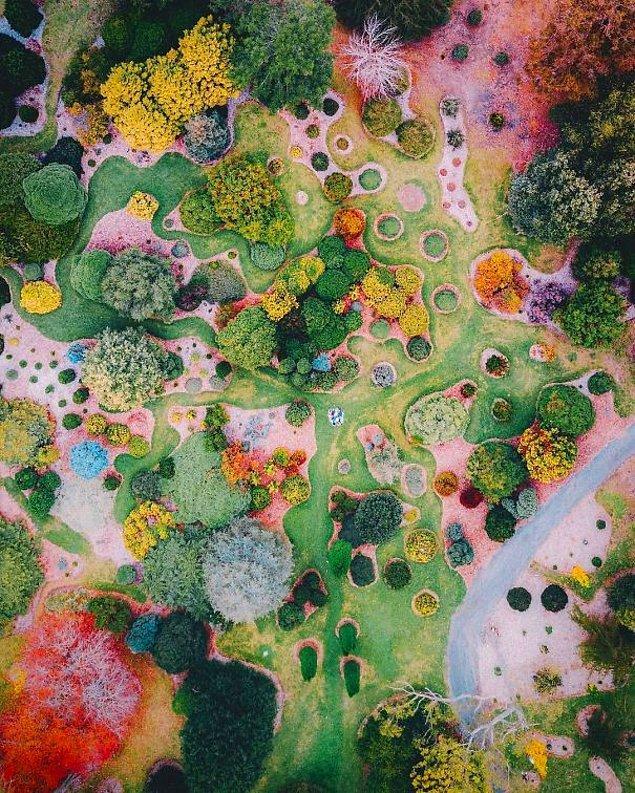 24. Sürrealist bir resme benzeyen bahçe görüntüsü