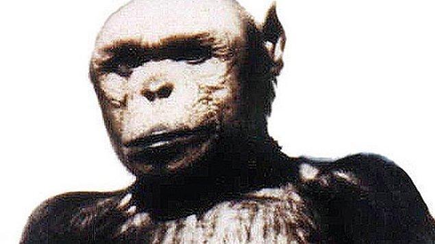 Bunlardan en tuhaf ve ezberbozanlarından biri de şüphesiz insan-şempanze kırması bir canlı, bir İnsanze yaratma çabasıydı.