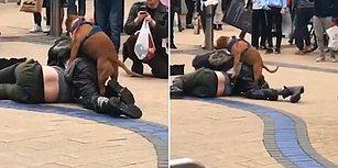 Sarhoş Kavgasına Karışan Fırsatçı Köpek