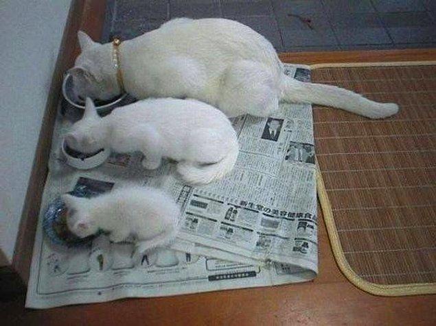 4. Kedilerde yaşlarına göre beslenme önemlidir.