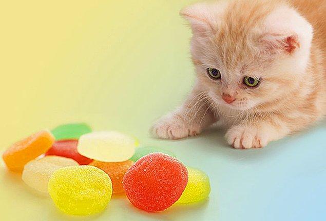 5. Şeker, kediler için en zararlı gıdalardandır!