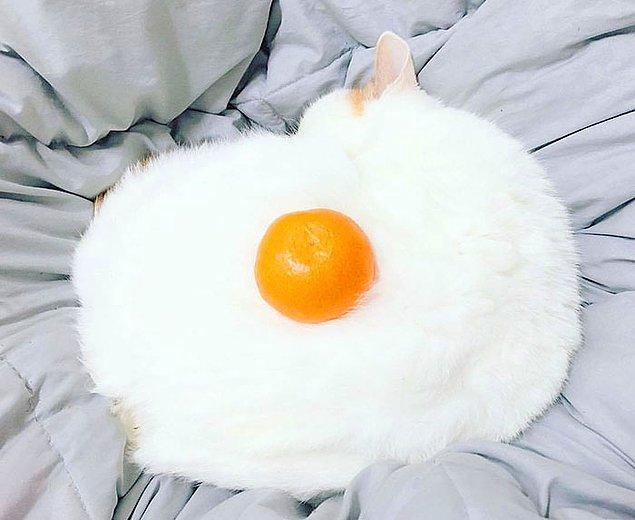 6. Kedinize çiğ yumurta vermek gibi bir hata yapmayın...