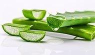 Cildinin Yaşam Kaynağı Aloe Vera Bitkisini Daha İyi Tanıyalım!