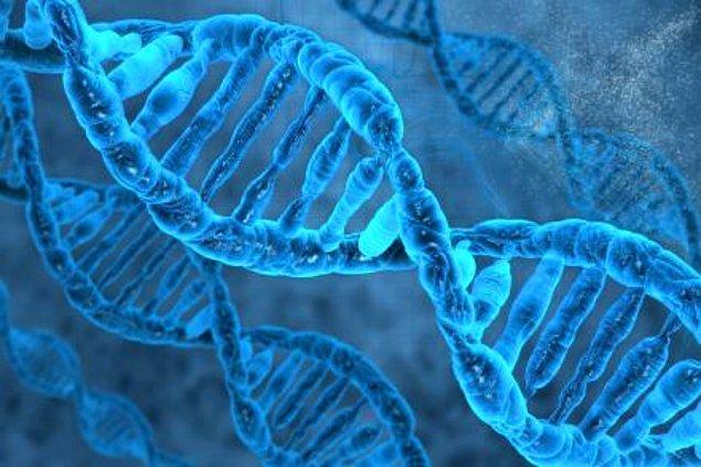 5. Eğer vücudumuzdaki DNA hücrelerini düz bir çizgi oluşturabilecek biçimde arka arkaya dizebilseydik, 20.000.000.000 kilometre yapardı. Aşağı yukarı Güneş'e 66 defa gidip gelmek anlamına gelen bir mesafe bu.