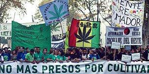 Arjantin'de Binlerce Kişi Meclise Yürüdü: 'Evlerde Kenevir Üretimi Serbest Bırakılsın'