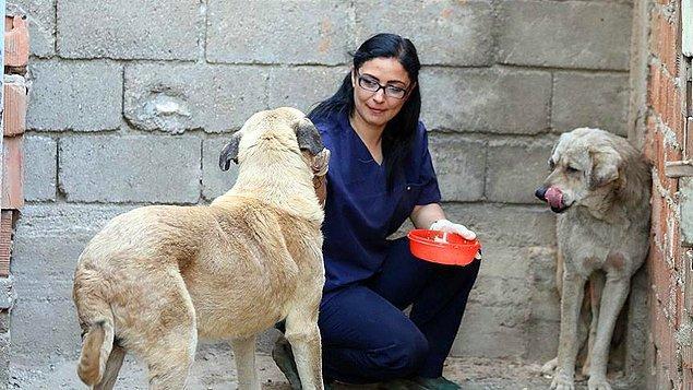 Tüyleri tamamen dökülen ve vücutlarının büyük bölümünde yaralar oluşan köpekleri eve götüren Küçük, köpeklerin tedavilerine başladı.
