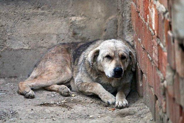 """Köpeklerle sıkı bağ kuran Küçük, yaşadığı zorluklardan dolayı birine """"Şans"""" diğerine """"Mucize"""" adını verdi."""