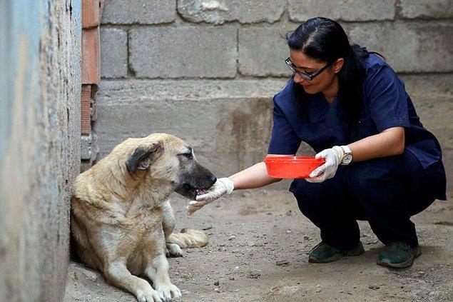 Daha önce de ölmek üzere olan Çin aslanı cinsi köpeği tedavi etmişti