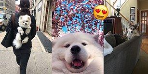 Gördüğünüz An Gözlerinizden Kalpler Fırlamasına Engel Olamayacağınız 17 Dünya Tatlısı Köpek