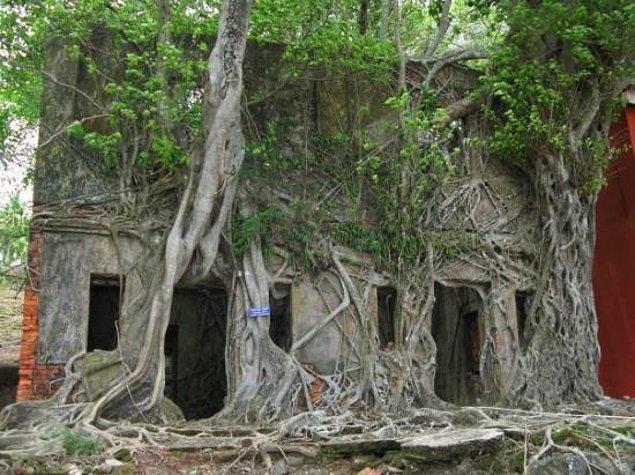 5. Ross Adası, Güney Andaman Bölgesi