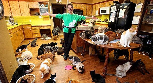 Birçok evcil hayvan sahipleneceksin!