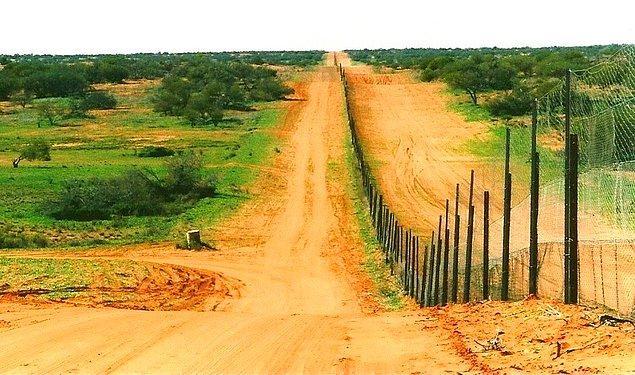 8. Avustralya'daki bir çitin uzunluğu Miami ile Seattle arasındaki mesafeden daha uzundur.